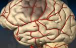 Чем лечить сужение сосудов головного мозга