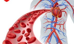 Препараты для улучшения кровообращения в руках